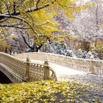 Зимний центральный парк в Нью-Йорке