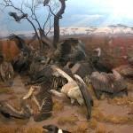 Зал млекопитающих Африки