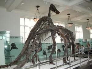 Скелет Антотитана