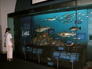 Изображение подводной жизни в океане